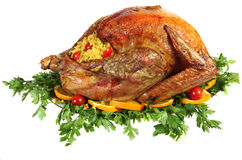 Roast turkey on herb bed. A stuffed, roast turkey on a bed of Italian flat-leaf parsley, garnished with sliced of orange and cherry tomatoes. Studio isolated royalty free stock images