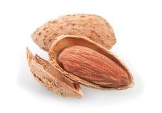 Roasted almond nut Stock Image