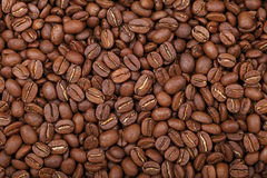 Roasted Arabica coffee beans background top view. Roasted brown Arabica coffee big beans background pattern, close up, elevated top view Stock Images