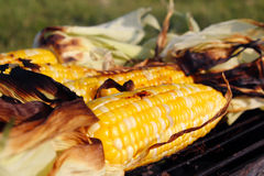 Roasted barbecue corn Royalty Free Stock Images