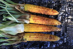 Roasted barbecue corn Stock Images