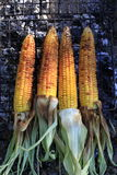 Roasted barbecue corn Stock Image