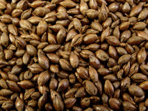 Roasted Barley Stock Photo