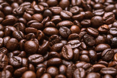 Roasted brown coffee beans Stock Images