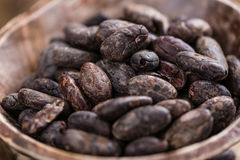 Roasted Cacao Beans Stock Photos