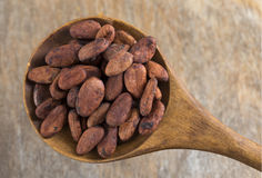 Roasted cacao beans in wooden spoon Stock Image