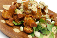 Roasted Chanterelles with  Cheese Sauce Stock Image