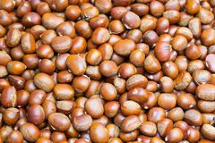 Roasted chestnut Stock Photos