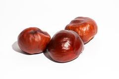 Roasted chestnuts Royalty Free Stock Image