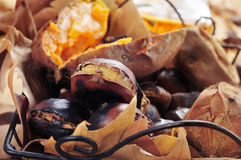 Roasted chestnuts and roasted sweet potatoes in a basket. Some roasted chestnuts and some roasted sweet potatoes in a metal basket with autumn leaves, on a Royalty Free Stock Photo