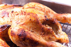 Roasted chicken in the tray Royalty Free Stock Images