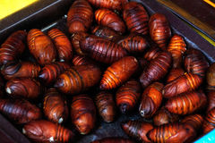 Roasted cicada pupa royalty free stock photo