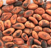 Roasted cocoa beans Stock Photos