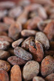 Roasted cocoa beans macro background Stock Images
