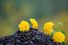 Roasted coffee. Beans with aroma of flowers campaign Stock Images