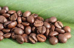 Roasted coffee. Leaf green and roasted coffee beans Stock Photography