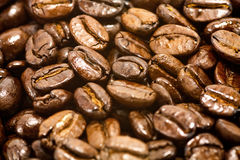 Roasted coffee beans. Shiny Dark Roasted African Coffee Beans Royalty Free Stock Photos