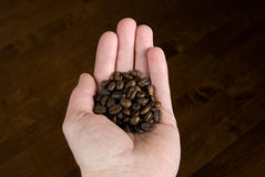 Roasted coffee beans. Whole coffee beans in hand Royalty Free Stock Photo