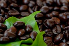 Roasted coffee beans . Stock Images