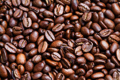 Roasted coffee-beans Stock Image