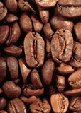 Roasted coffee beans Stock Images
