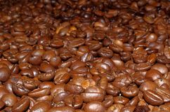 Roasted coffee beans as a background. Close up photo of roasted coffee beans laid out as a background. Focus on foreground royalty free stock images