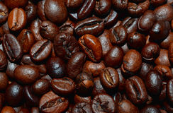 Roasted coffee beans background. Fresh roasted coffee beans background, texture. Arabica bean wallpaper, close-up Royalty Free Stock Photo
