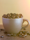 Roasted coffee beans  in brown coffee cup with sunlight Royalty Free Stock Image