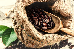 Roasted coffee beans in burlap sack with old wooden scoop Stock Images