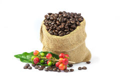 Roasted coffee beans in burlap sack with red and green coffee beans berries. Royalty Free Stock Photography