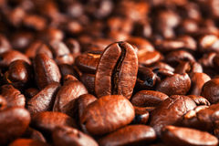 Roasted coffee beans, can be used. As a background Royalty Free Stock Image
