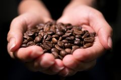 Roasted Coffee Beans close up view held by woman in cupped hands stock photo