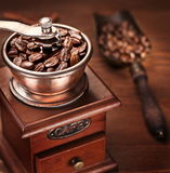 Roasted coffee beans in a coffee grinder. Royalty Free Stock Image
