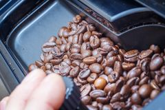 Roasted coffee beans in container from coffee machine stock photography