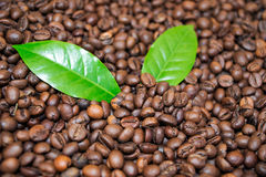 Roasted Coffee Beans Espresso and green leaf Coffee Stock Photography