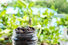 Roasted coffee beans in glass bottle and blurred green background Stock Photos