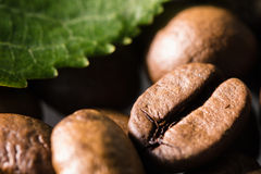 Roasted coffee beans with green leaf macro close up motif Royalty Free Stock Photo