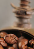 Roasted coffee beans in the grinder Royalty Free Stock Image