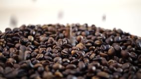Roasted coffee beans group. Falling down stock footage