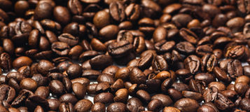 Roasted coffee beans isolated on white background. With copy space. Frame for creative concepts or advertising Stock Image