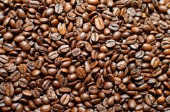 Roasted coffee beans. Lots of recently roasted coffee beans found in the coffee factory stock image