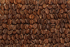 Roasted coffee beans. Macro of roasted coffee beans laying in rows with extended depth of field. Hard light Stock Image