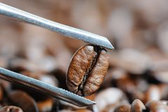 Roasted coffee beans macro Stock Photography