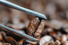 Roasted coffee beans macro with tweezer Royalty Free Stock Photography