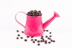 Roasted coffee beans in pink water can Royalty Free Stock Photo