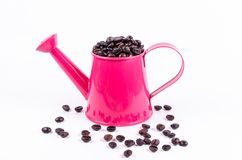 Roasted coffee beans in pink water can Stock Photography
