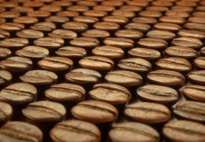Roasted Coffee Beans Selection Stock Photos