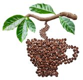 Roasted coffee beans in the shape of coffee cup hanging from coffee branch royalty free stock photos