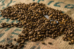 Roasted coffee beans with a spoon in between. For pouring Royalty Free Stock Images