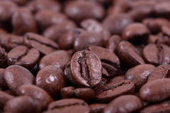 Roasted coffee closeup. Background of roasted coffee closeup Royalty Free Stock Images